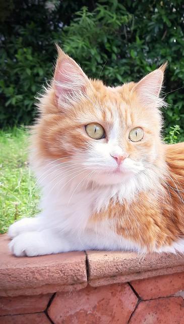 Greta. Happy Caturday!