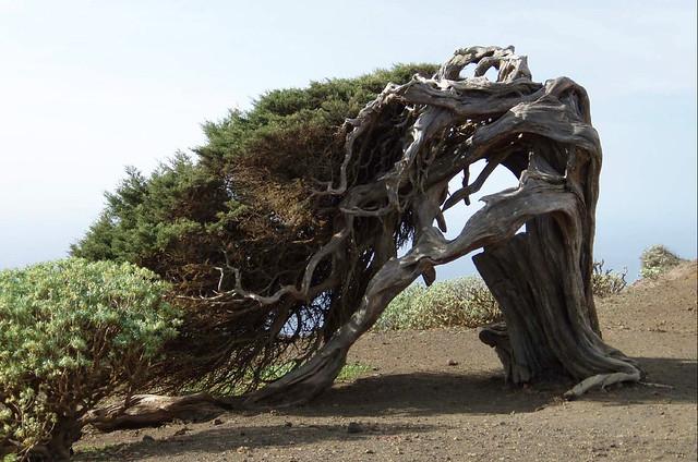SABINA en la isla de El Hierro