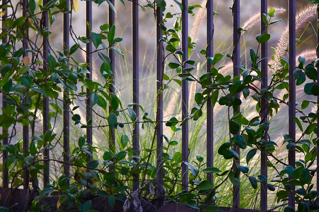 Beyond the Wrought Iron Fence