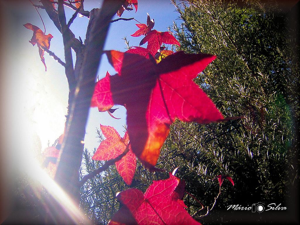 Outono a_ms