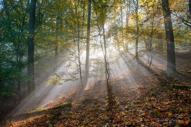 Light and colors of autumn!