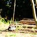 72 - Swing