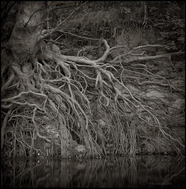 Roots Study 2020, No. 31.jpg