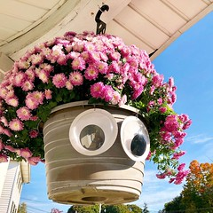 Her name is Mum A. Mia! #dragqueen #drag #mums #hangingflowers #autumflowers #mumflowers #goggelyeyes
