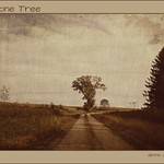 Lone tree on the curve.
