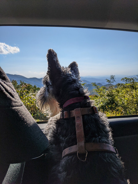 Pasha enjoying the view