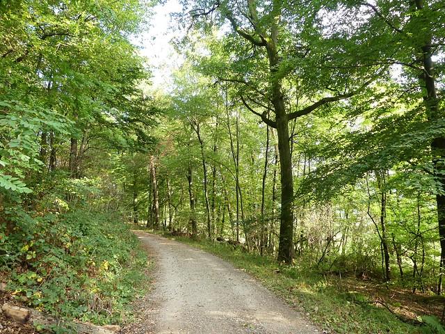 Spaziergang in der Natur