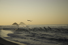 Sunset with brown booby by lucasdamo1