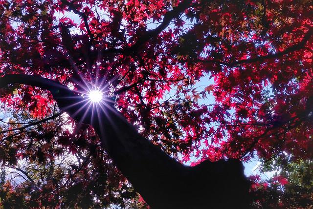 Autumn sunburst!