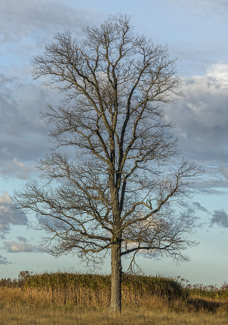 just a tree.....