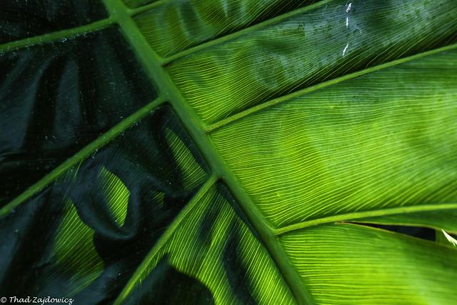 Magic Leaf - Explored