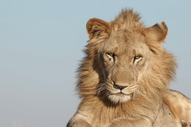 Kingly Attitude