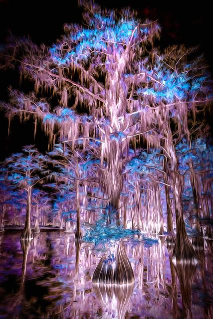 Spooky Cypress Swamp