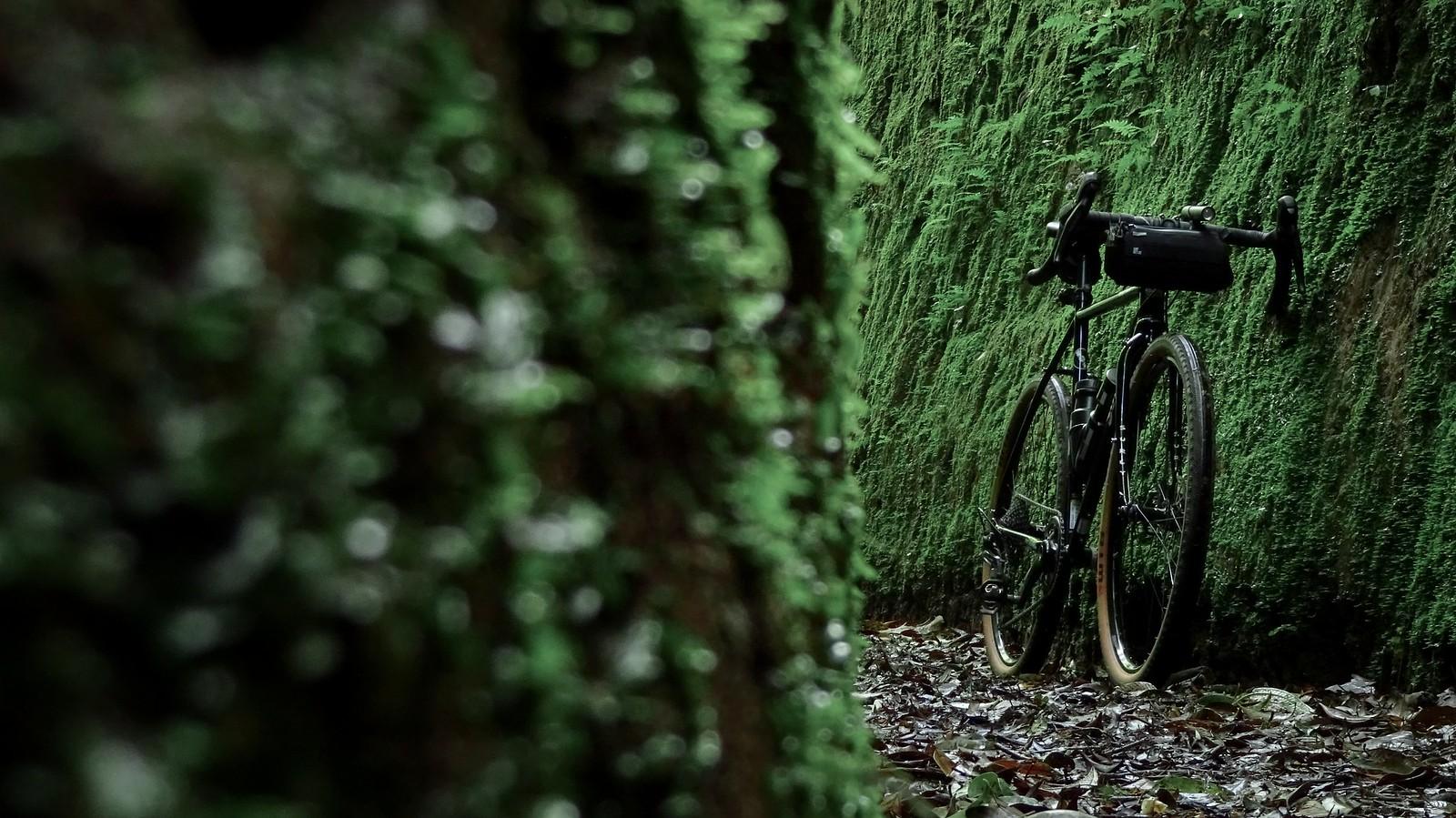 Jayagiri Moss Alley: A Weekend Leisure Ride