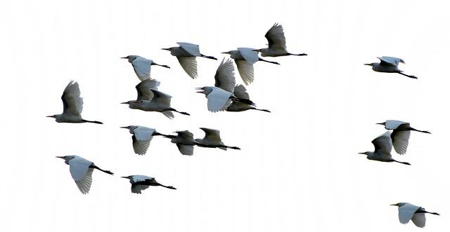 Water birds returning home at dusk