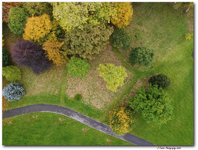 Autumn colours - Queens Park, Burnley