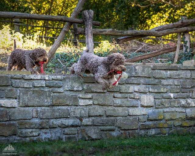 Tobia & Costantino  ♡ Happy Dogs ♡