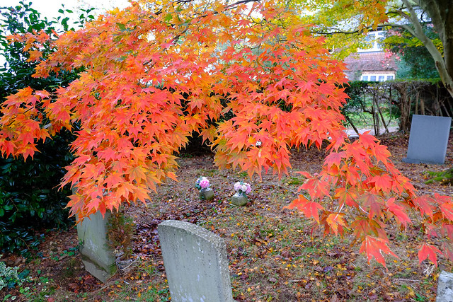 Churchyard Nature Kent