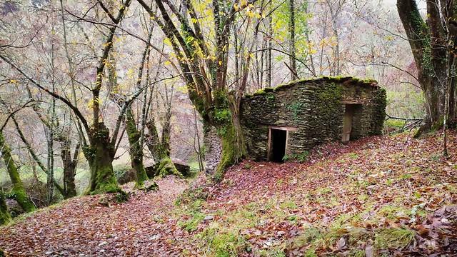 Nos bosques de Courel...
