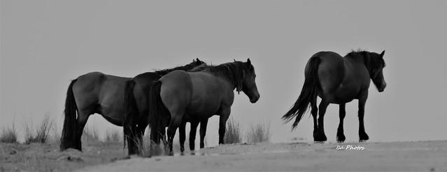 Black and white..horses