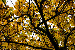 Top of The Tree - Branch, twigs and leaves