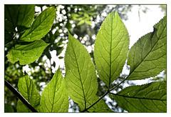 Leaves_1834