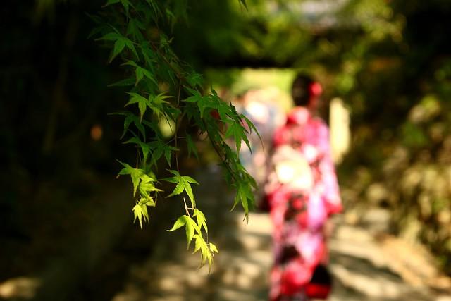 圓徳院 若葉の頃  Entokuin Temple Kyoto   Angénieux G10  F:48  1:4