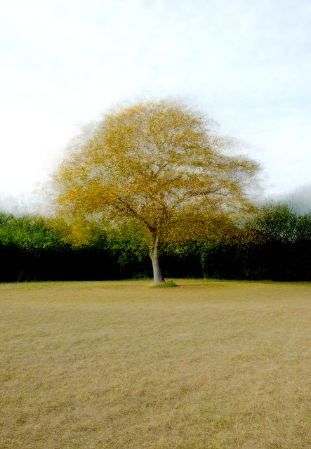 The summer is leaving the tree