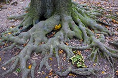 Bottom of The Tree - trunk roots