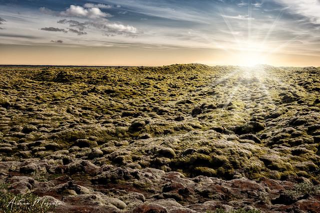 Mossy Lava Field (Iceland)