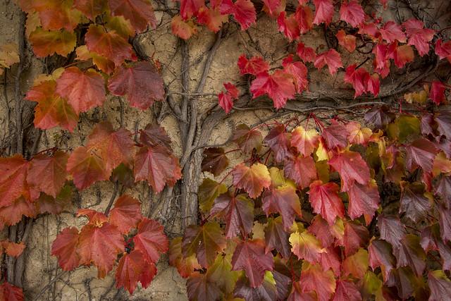 Autumn Glow 5