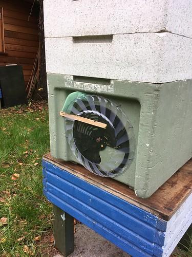 Autumn beekeeping