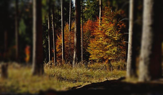 GERMANY, Schönbuch-Wanderung , autumn series, 60017/13082