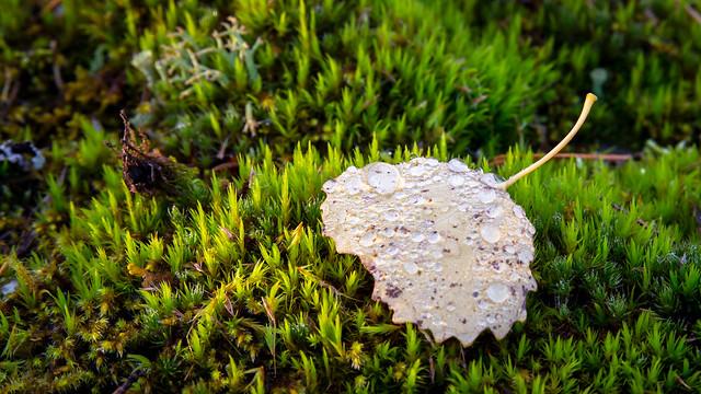 Raindrops on a autumn leaf