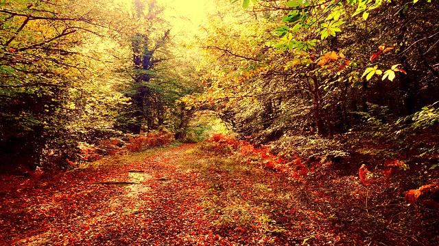 Sous-bois en automne 🍂🍁🍂🍁🔥