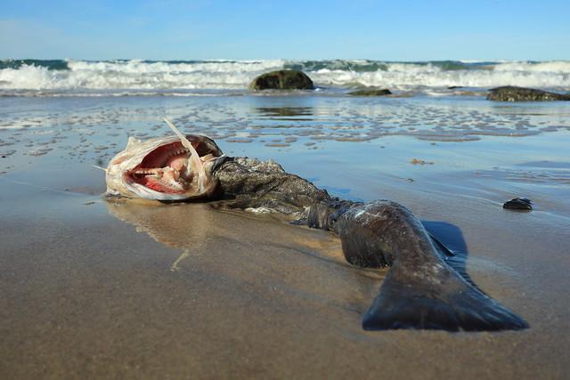 Nordsee ist Mordsee