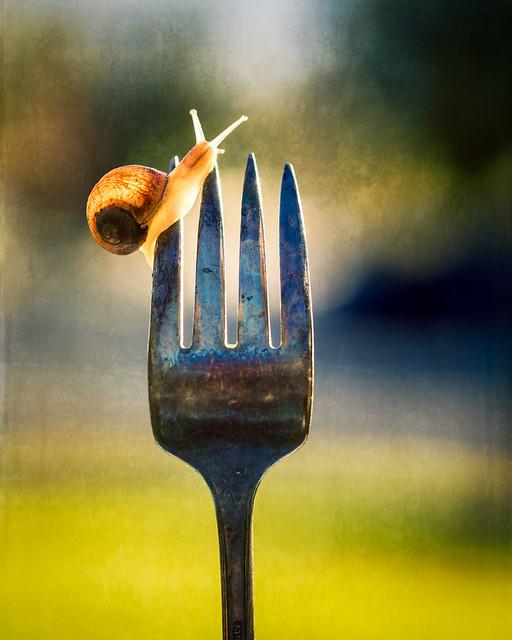 fresh escargot?