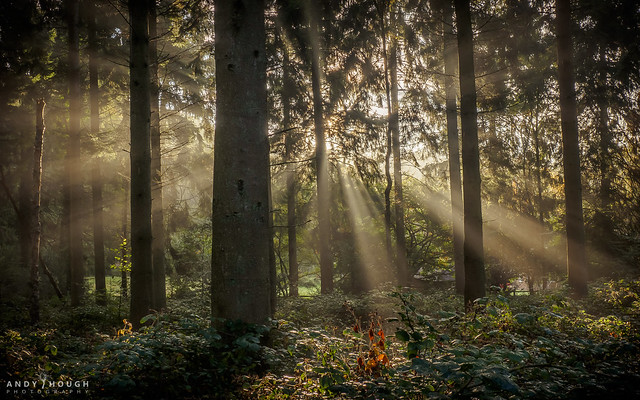The light wakes up the wood