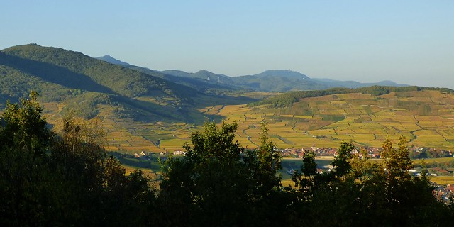 Le patchwork du vignoble alsacien en octobre.