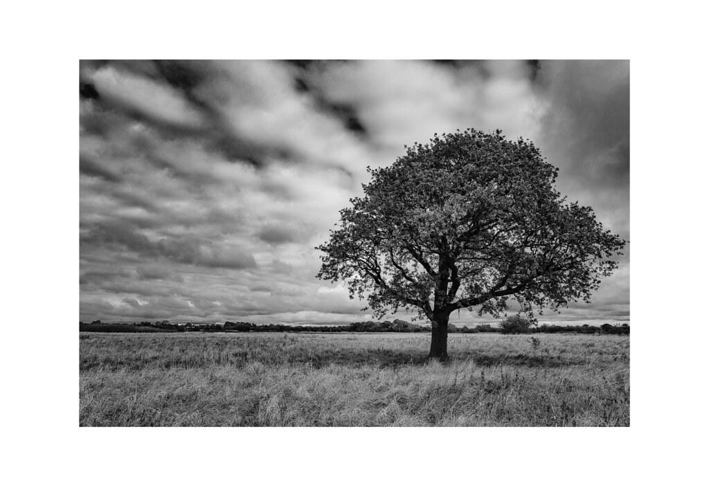 Tree by Haltemprice Priory Farm