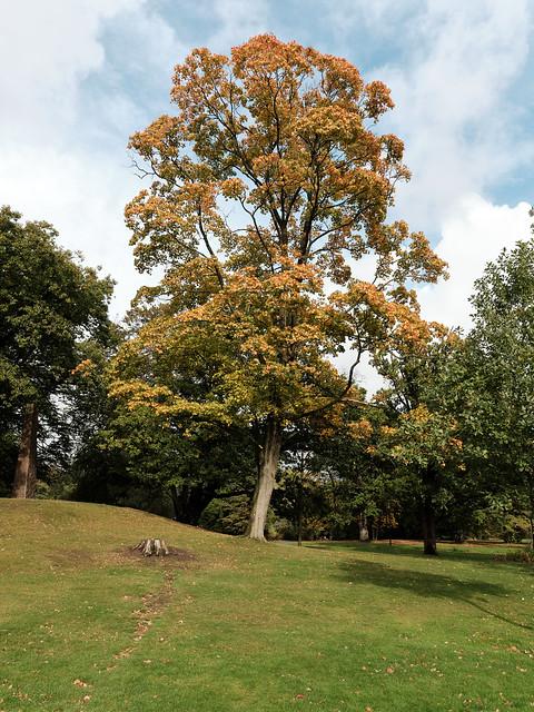 Autumn colours starting in Göteborg Slottsskogen