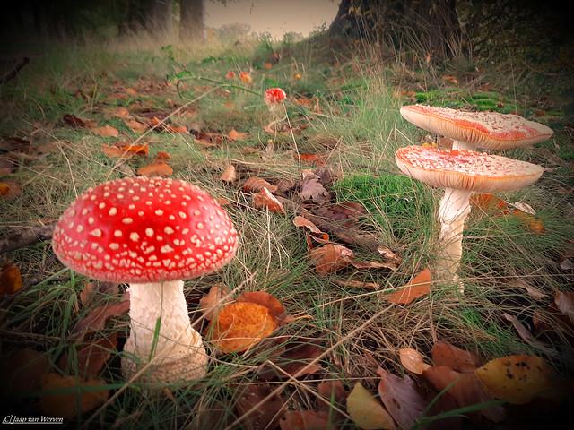 Autumn Muschrooms - On Explore