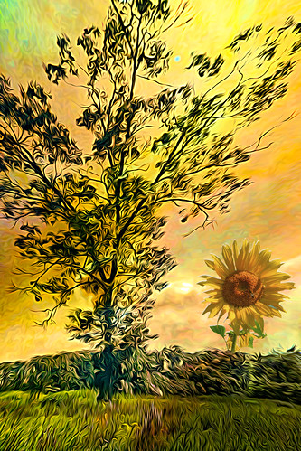 tree sun flower picture odd paint photo magic colorful day digital flickr country bright happy colour scenic america world sunset sky red nature blue white green art light cloud park landscape summer old new photoshop google bing yahoo stumbleupon getty national geographic creative composite manipulation hue pinterest blog twitter comons wiki pixel artistic topaz filter on1 sunshine image reddit tinder russ seidel facebook timber unique unusual fascinating color