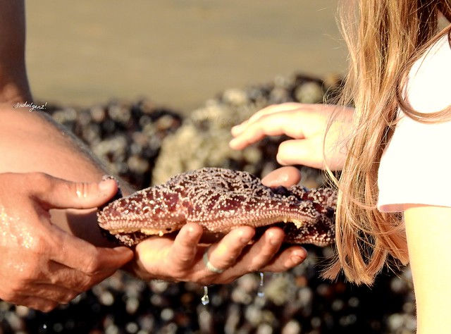 Let me touch the Starfish