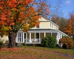 Yellow House and Maple Tree