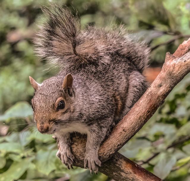 Tail flickr.