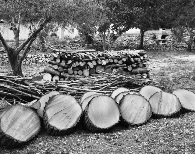9535.Firewood