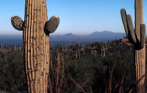 Saguaro National Monument (4)