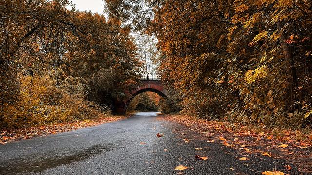 Polish gold autumn [Explore, 19,10,2020]