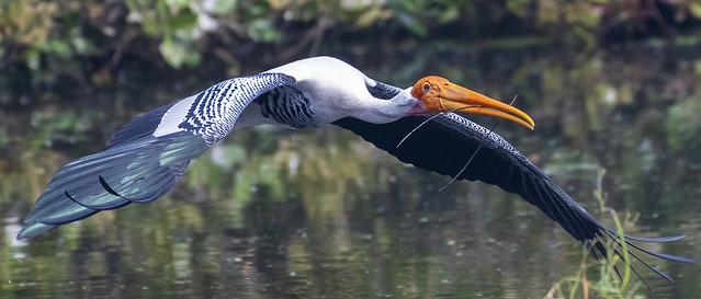 Impressive wingspan
